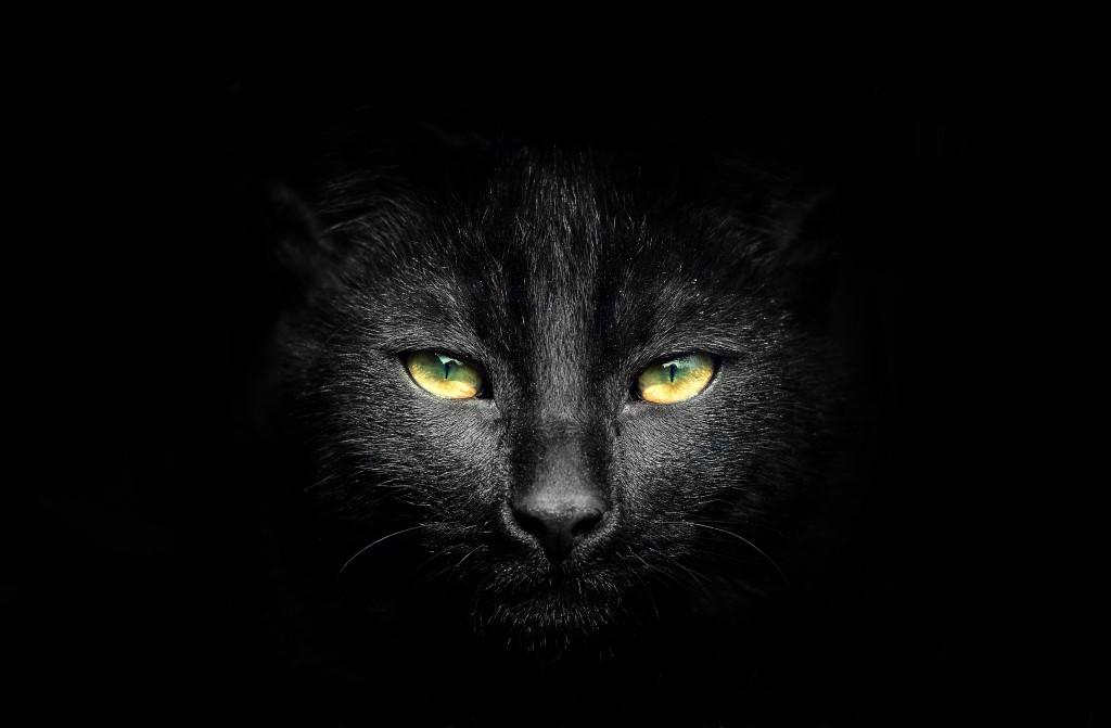 Black cat potrait