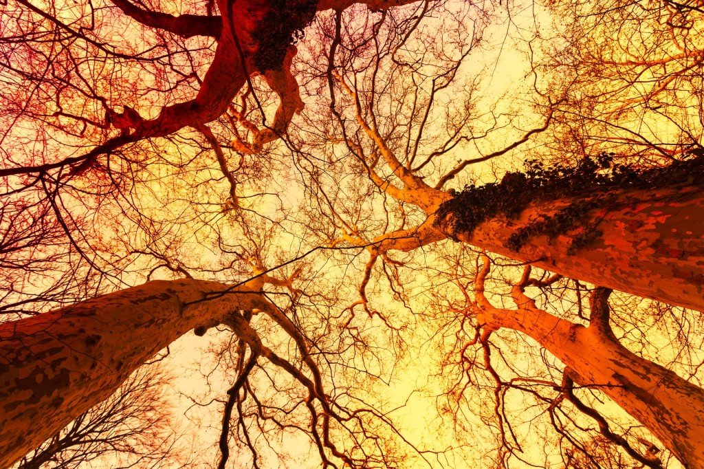 Magical bare trees of an autumn forest in Hungary