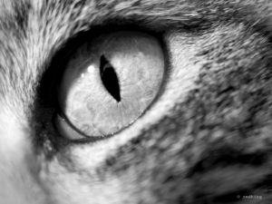 cat eye - close-up