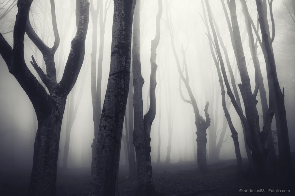 old twisted trees in a spooky dark forest