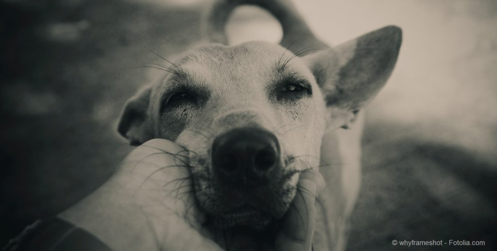 lovely touching dog head in vintage color and mood tone